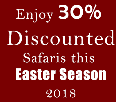 Enjoy 30% Discounted Uganda Gorilla Safaris this Easter Season 2018