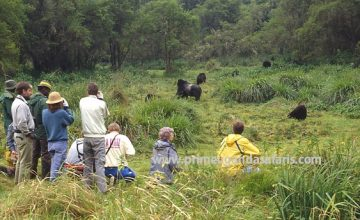 15 Days Uganda Gorilla, wildlife & Cultural safari