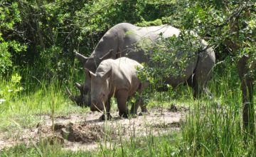 2 Days Murchison Falls Safari Uganda, Murchison Falls National Park Wildlife Safari in Uganda