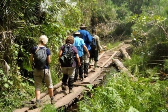 3 Days Chimpanzee Trekking Safari Uganda Kibale Tour