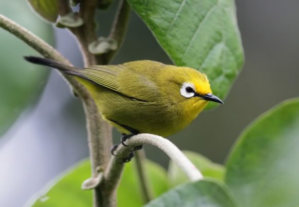 Bird species in Mount Elgon National park