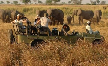 Game drive Kidepo Valley National Park