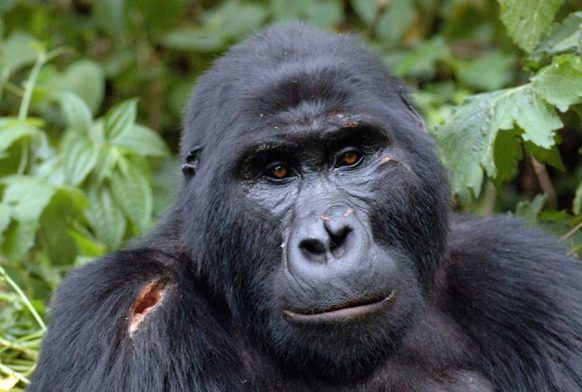 11 Days Uganda gorilla wildlife and cultural safari
