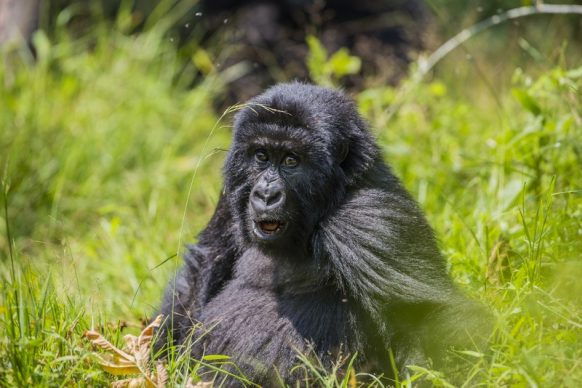 4 Days Bwindi Gorillas Safaris & Mburo Tour