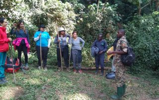 Determinants of a Gorilla Family an individual will trek-Uganda Safari News