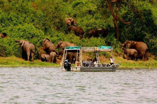2 Days Queen Elizabeth Park Safari Uganda Tour
