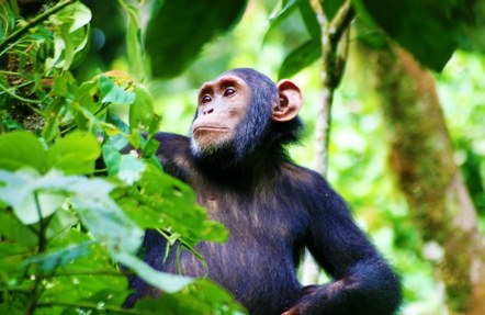12 Days Uganda and Tanzania Safari-Kibale Forest National Park