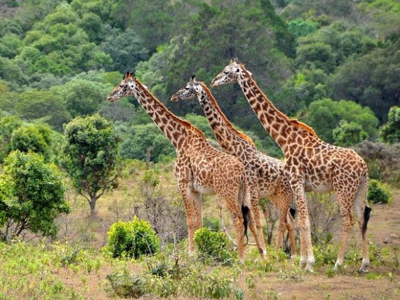 2 Days Lake Manyara Safari Tour