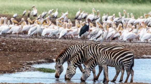 12 Days Uganda and Tanzania Safari - Lake Manyara National Park