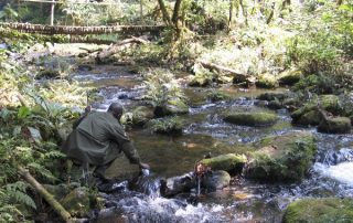 Bwindi tops 25 of the most beautiful places around the world by CNN -Uganda Safari News