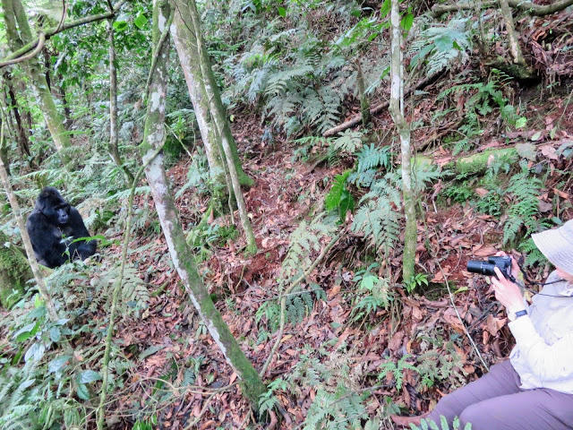 The best way of planning for a Gorilla Trekking safari-Uganda Safari News