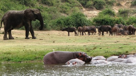 2 Days Queen Elizabeth Park Safari Uganda, Queen Elizabeth National Park Wildlife Safari in Uganda