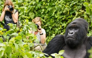 10 Days Rwanda Gorilla Amazing Safari Tour