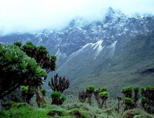 Mountain Rwenzori National Park, the fascinating mystical challenge