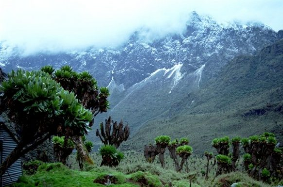 Rwenzori Mountains exploring the Mahoma trail