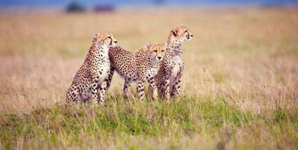 12 Days Uganda and Tanzania Safari - Serengeti National Park