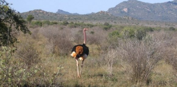 5 Days Kenya Safari Tour -Tsavo National Parks