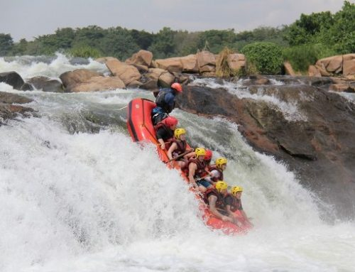 The Strategy To Keep You Enjoying A Spectacular Nile River Experience On Your Uganda River Experience-Uganda Safari News