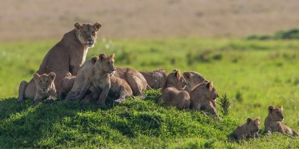 kenya safari tours packages