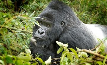 4 Days Rwanda Adventure Safari